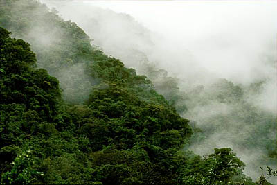 Manu Cloud Forest in Peru